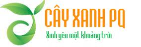 Cây Xanh Phú Quốc – Cây nội thất Phú Quốc